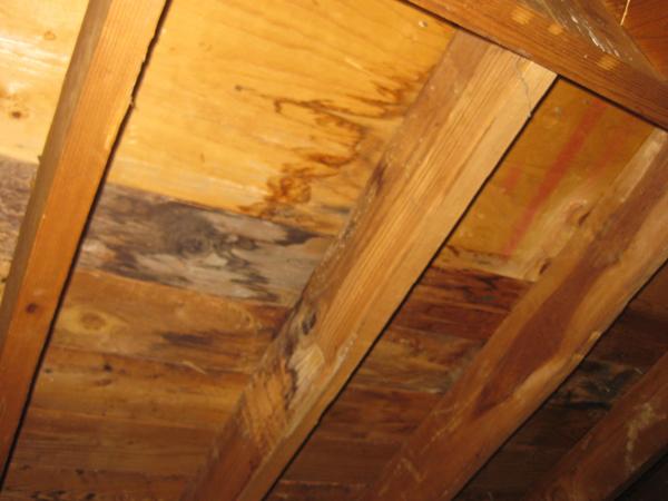 Water Damaged Roof Sheathing